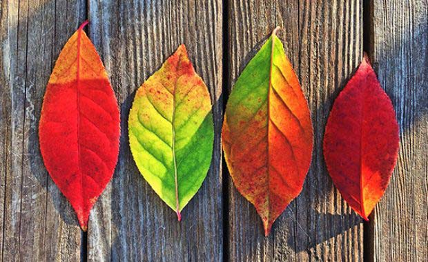 Autumn 2017 – Tax Briefing
